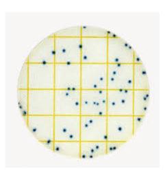 3M Petrifilm Selective e coli